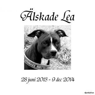 Gravsten hund bild Älskade Lea