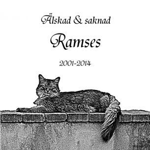 Gravsten katt Älskad och saknad Ramses