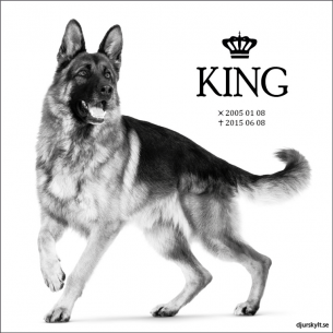 Gravsten hund King