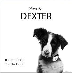 Gravsten hund finaste Dexter