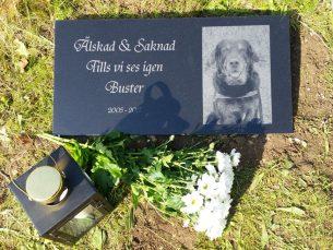 Gravsten hund Tills vi ses igen Buster