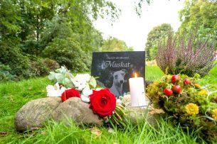 Gravsten djurkyrkogård ljus med ros och ljung