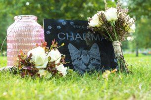 Gravsten katt Charma