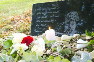 Rosor och ljus på gravplats hund