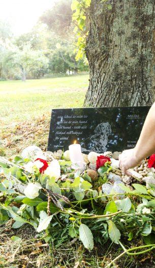 Lägger rosor på gravplats hund bild Milou
