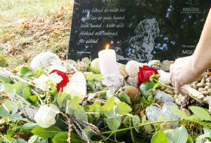 Lägger rosor på gravplats hund