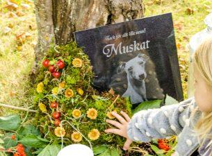 Flicka lägger blommor på gravplats hund