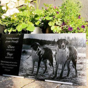 Stor gravsten två hundar Diara Yago
