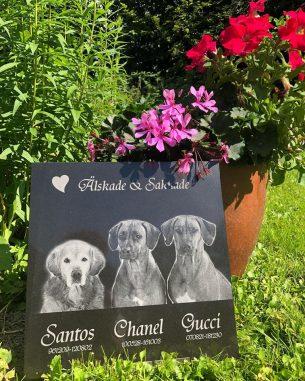Gravsten Hund Älskade och saknade Santos Chanel Gucci