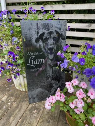Gravsten med foto hunden Liam
